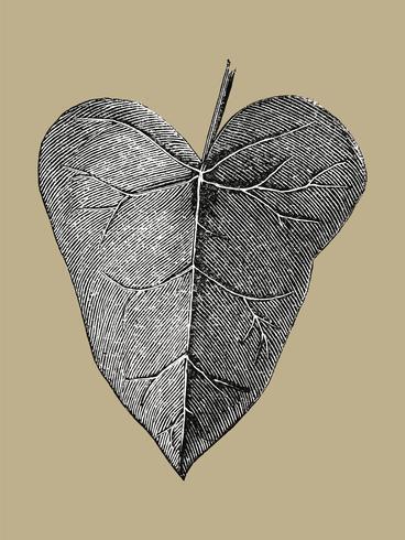vintage blad illustration