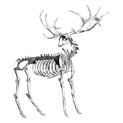 Tappning illustrationer av djur ben struktur