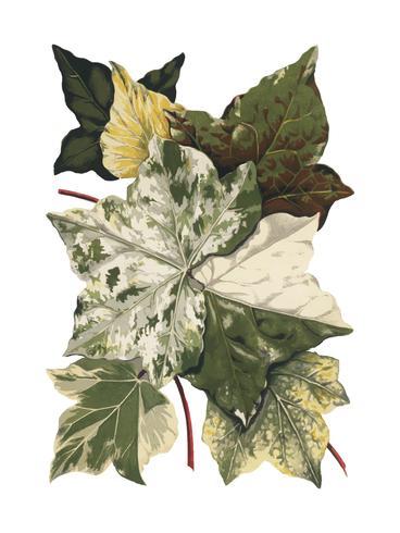 Ilustración de plantas y hojas vintage