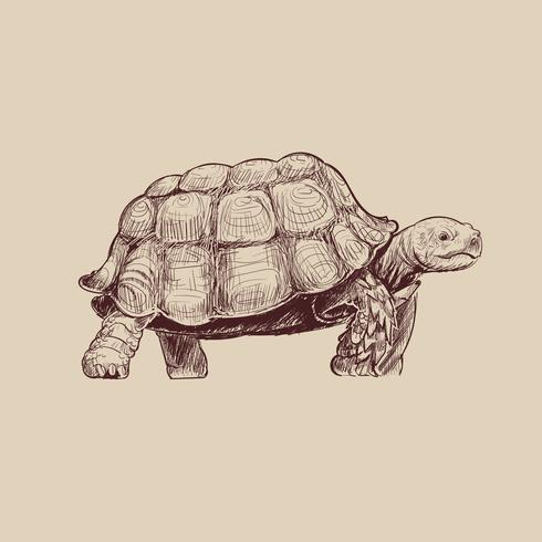 De stijl van de illustratietekening van schildpad