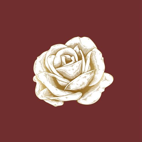 Dessin de roses anciennes