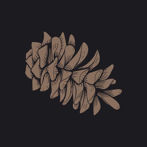 Vector de conos de abeto