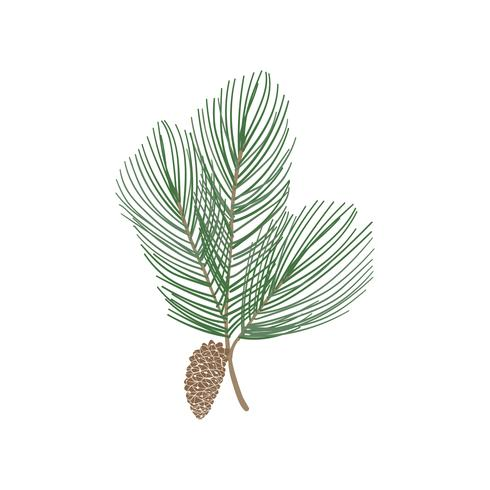 Fir tree branch with a pine cone vector