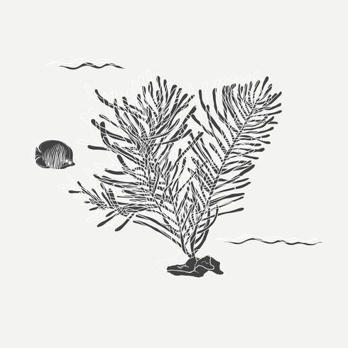 Dibujo de dibujos animados de plantas marinas y peces