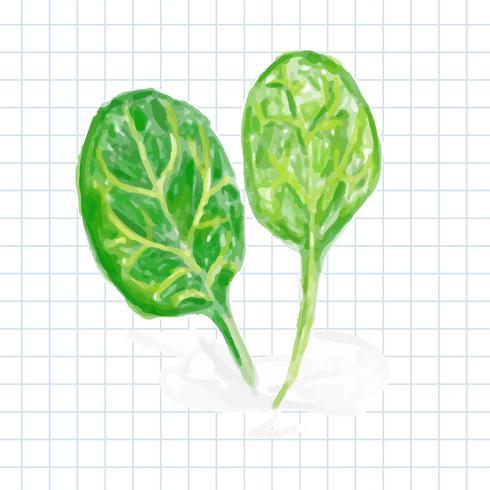 Style d'aquarelle de légume dessiné à la main