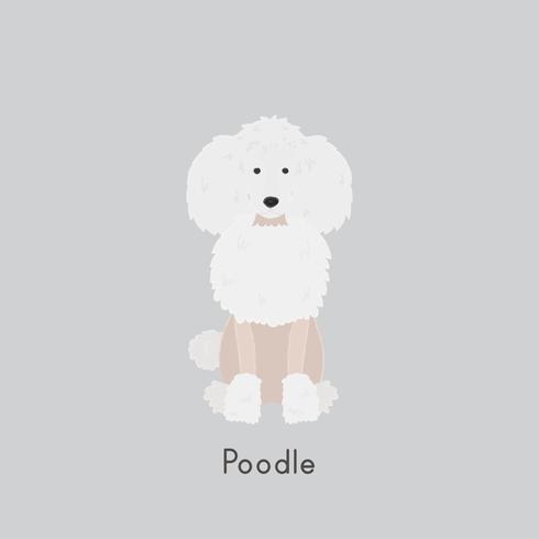 Cute illustration of a poodle dog