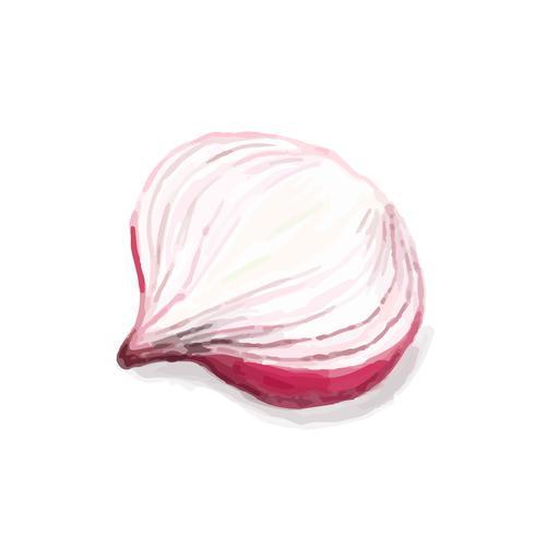 Estilo de aquarela de cebola mão desenhada