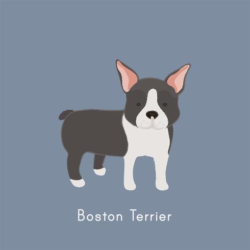 Nette Abbildung eines Boston-Terrierhundes