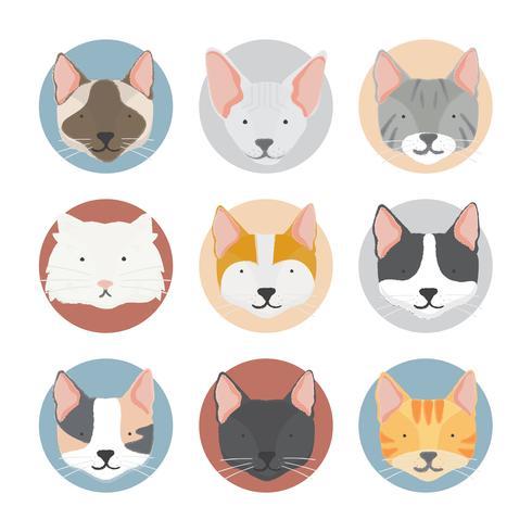 Abbildung der Katzensammlung