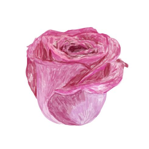 Illustration du dessin fleur rose