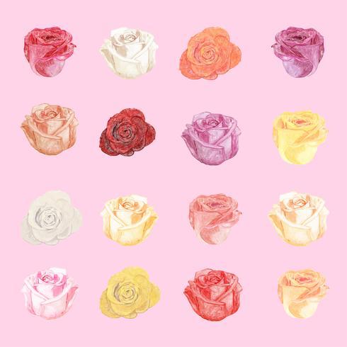 Ilustração, de, desenho, rosa branca, flor