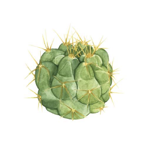 Hand gezeichneter Gymnocalycium Capillaense-Kaktus