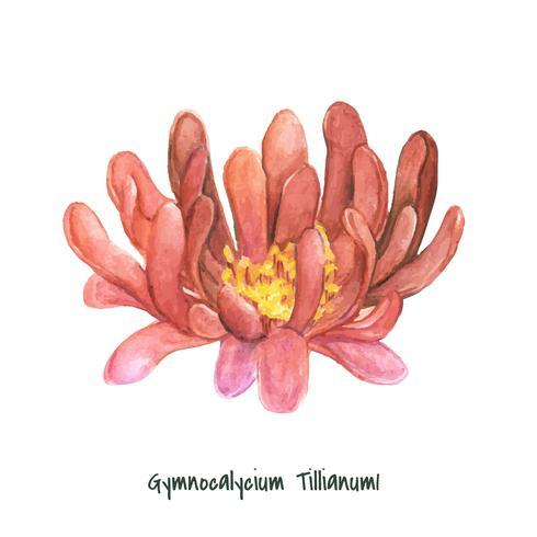 Cactus disegnato a mano del gymnocalycium del tillianum