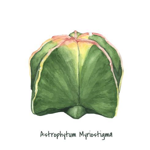 Astrophytum myriostigma dessiné à la main bonnet de l'évêque cactus