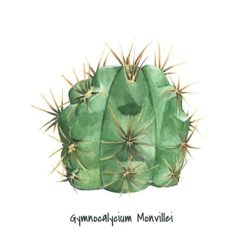 Hand drawn gymnocalycium monvillei cactus