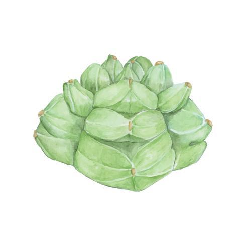 Hand drawn astrophytum kikko cactus
