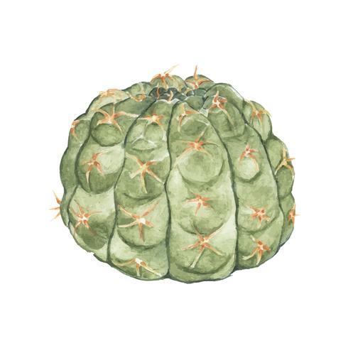 Handdragen gymnocalycium parvulum kaktus