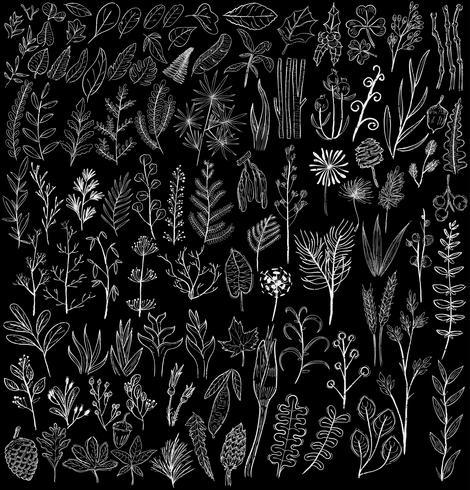 Illustration av olika typer av växter