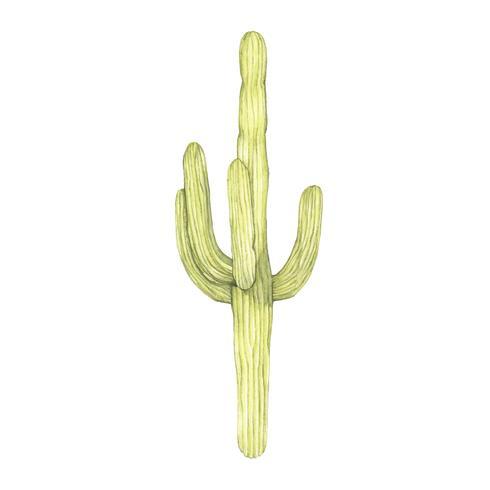 Hand getrokken saguaro cactus geïsoleerd op een witte achtergrond