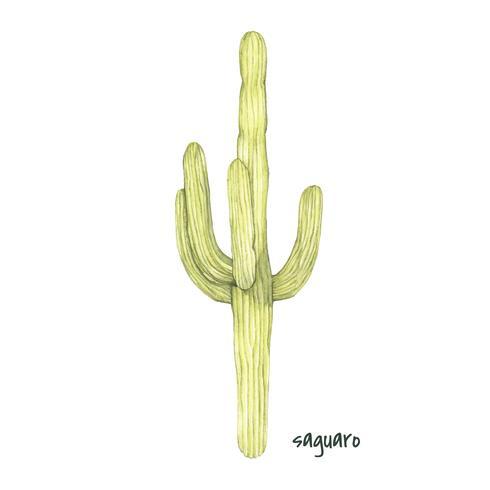 Cactus del saguaro disegnato a mano isolato su priorità bassa bianca