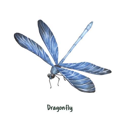 Handritad dragonfly isolerad på vit bakgrund