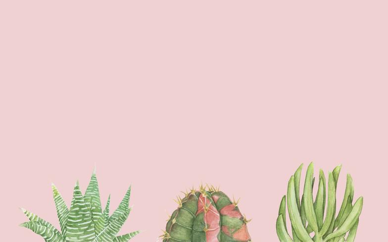 Dibujados a mano cactus y suculentas.