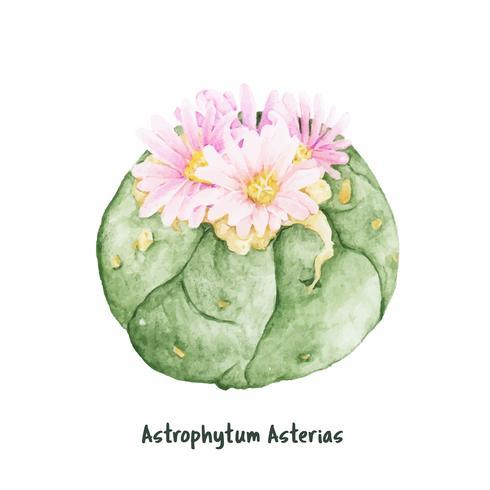 Mão desenhada astrophytum asterias cacto de dólar de areia