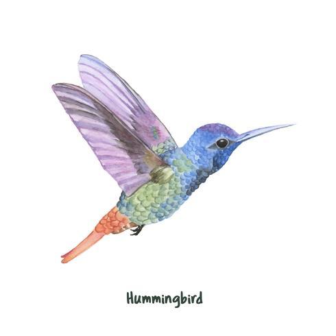 Handdragen kolibri isolerad på vit bakgrund