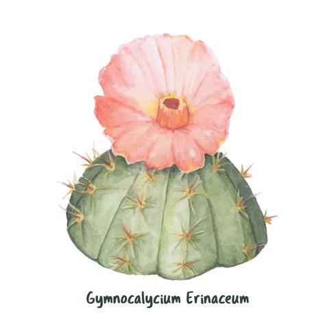 Mão desenhada gymnocalycium erinaceum queixo cacto