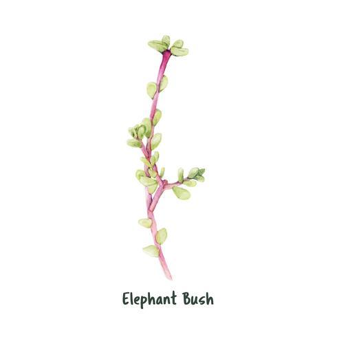Hand gezeichneter Elefantbusch saftig
