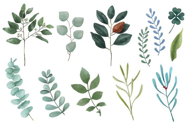 Différents types de plantes illustrées feuilles isolés sur fond blanc.