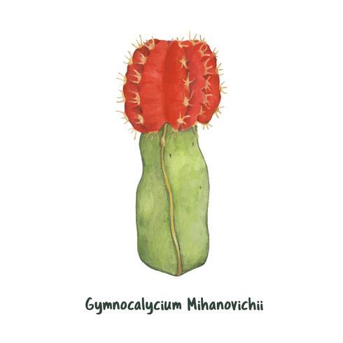 Hand getrokken gymnocalycium mihanovichii maan Cactus