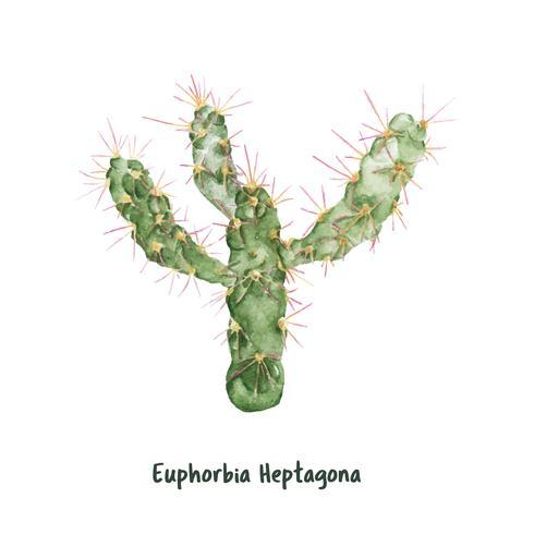Hand drawn euphorbia heptagona cactus