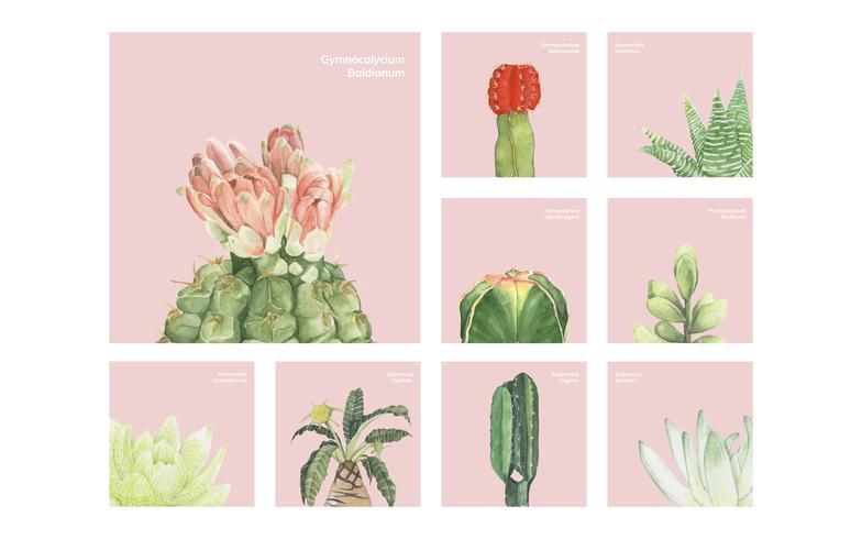 Cactus dessinés à la main et plantes succulentes