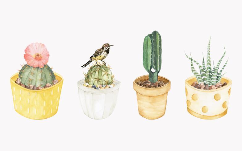 Hand drawn cactus plants