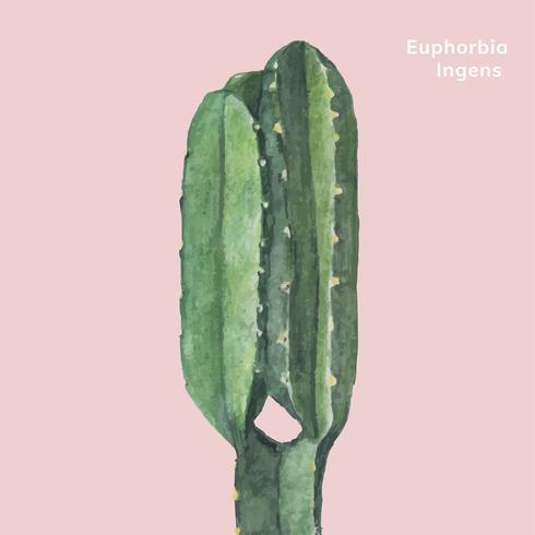 Mão desenhada euphorbia ingens candelabro Tree