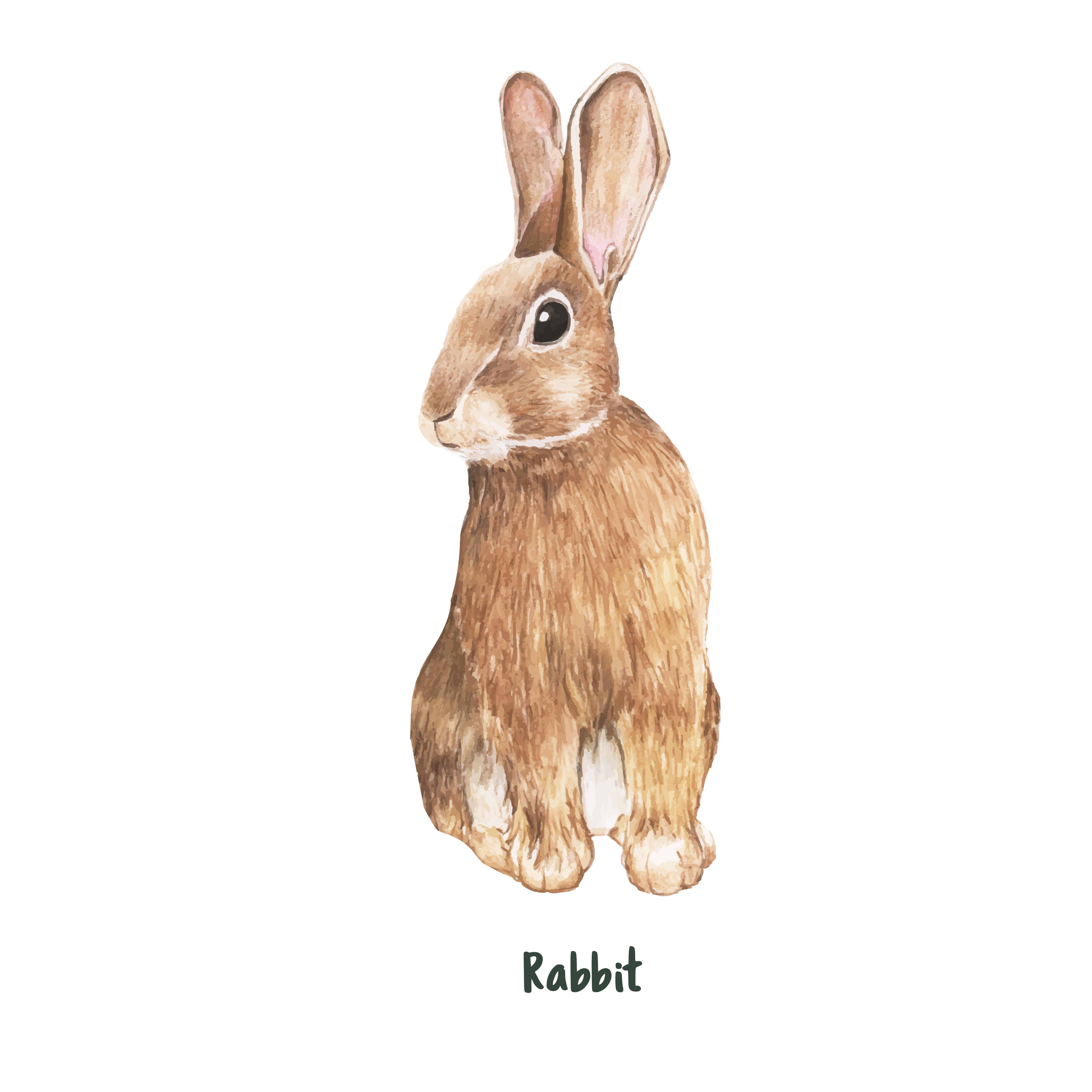 兔子圖案 免費下載 | 天天瘋後製