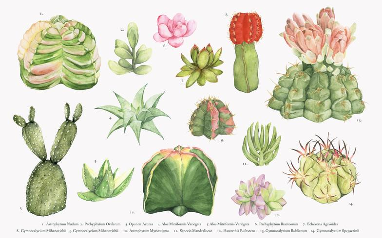 Collection de cactus dessinés à la main
