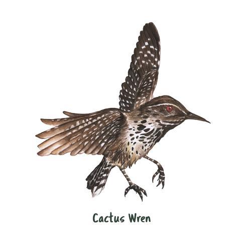 Main dessinée cactus wren oiseau