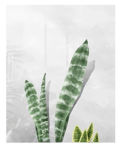 Sansevieria-zeylanica-Blatt lokalisiert auf weißem Hintergrund