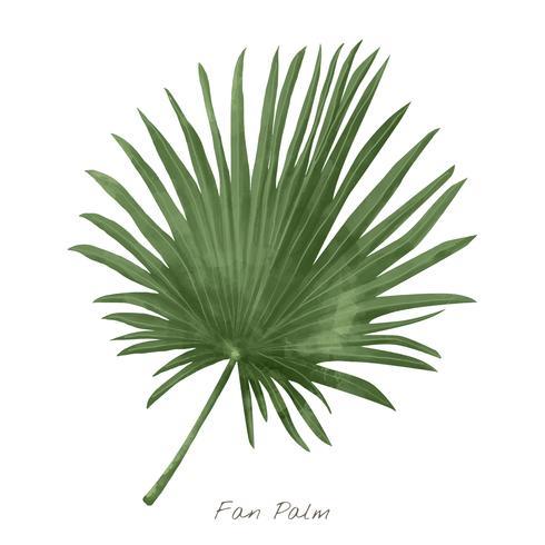 Folha de palmeira fã isolada no fundo branco