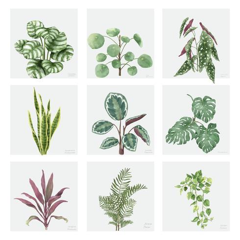 Samling av handgjorda ornamnetala växter isolerad på vit bakgrund