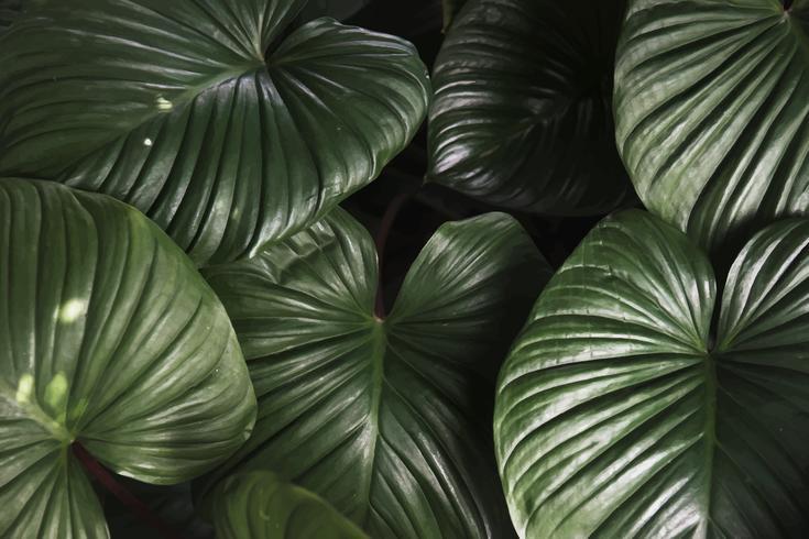 Gros plan, fond, feuille verte