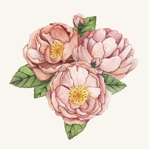 Dibujado a mano flor peonía aislada