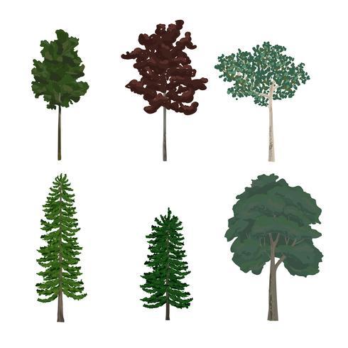 Samling av tall och lövträd illustrationer