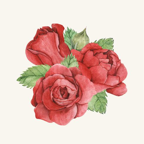 Hand drawn red rose isolated