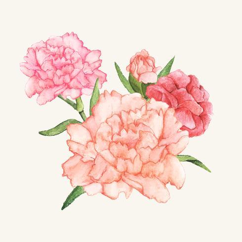 Fleur d'oeillet dessiné main isolé