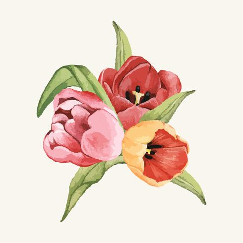 Fleur de tulipe dessiné à la main isolé