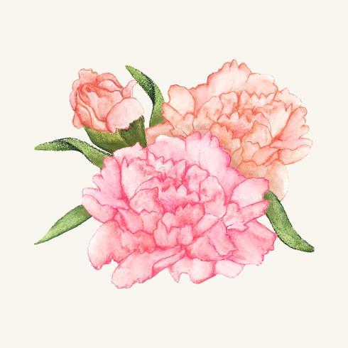 Hand gezeichnete Gartennelkenblume lokalisiert