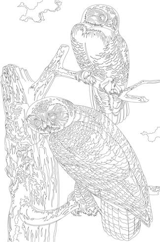 Snowy Owl from Birds of America (1827) by John James Audubon. Adult coloring page.